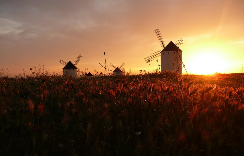 Photo wallpaper field, Dawn, mill