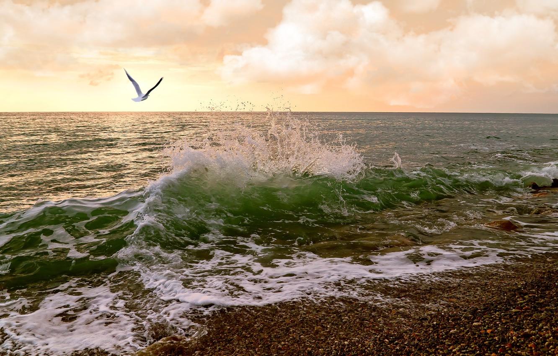 Photo wallpaper sea, clouds, Seagull