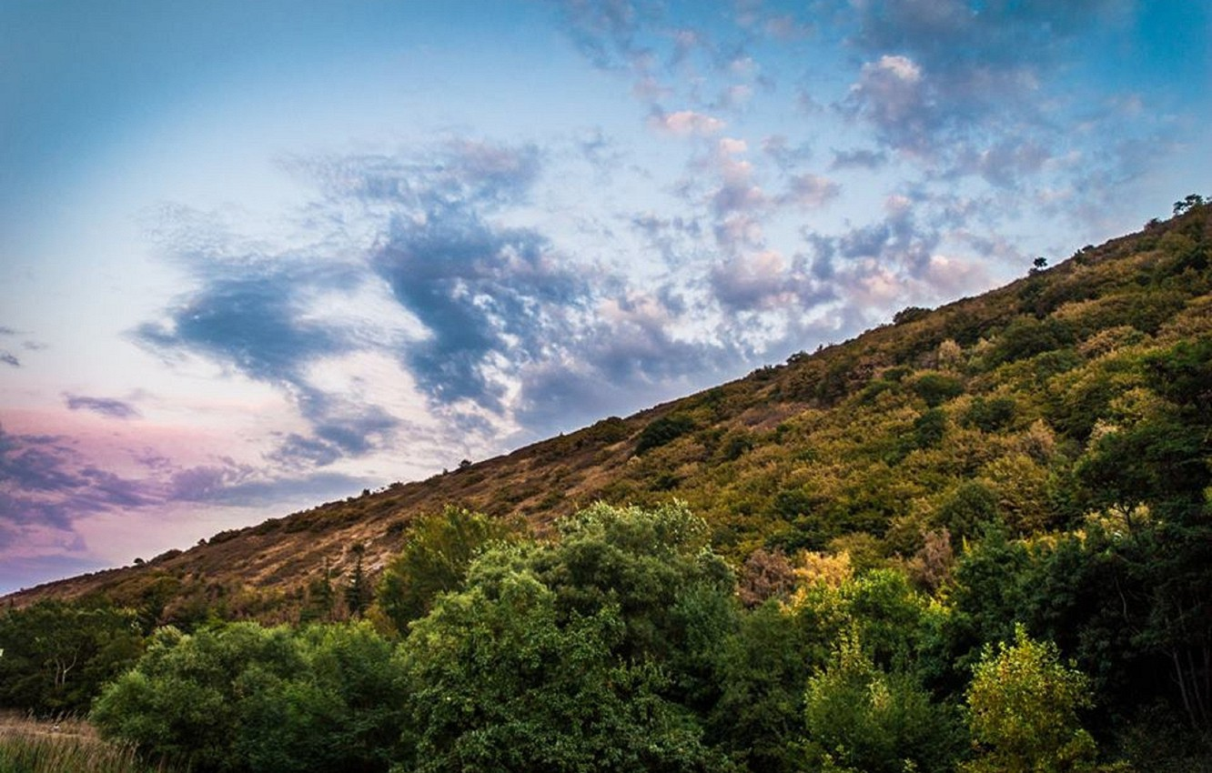 Photo wallpaper forest, the sky, clouds, mountains, nature, green
