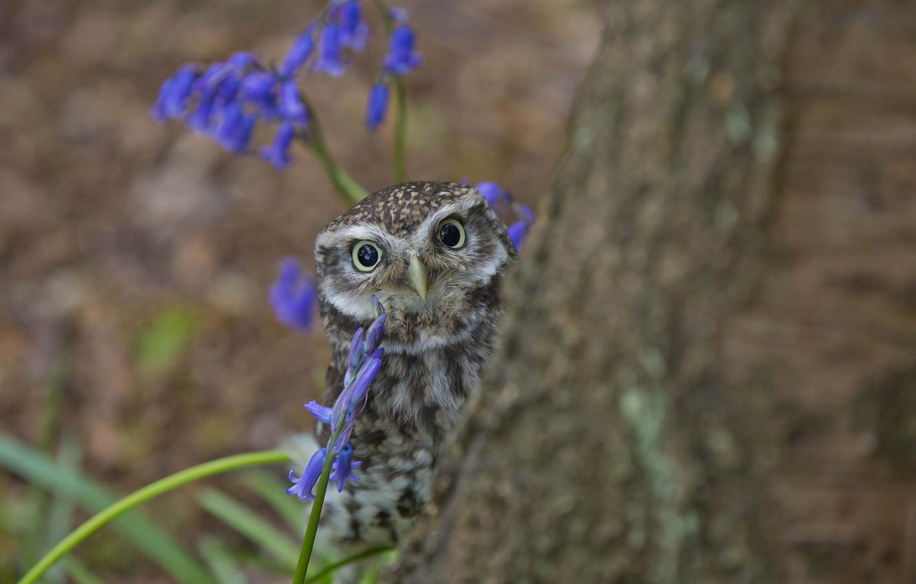 Photo wallpaper tree, owl, looks, owlet