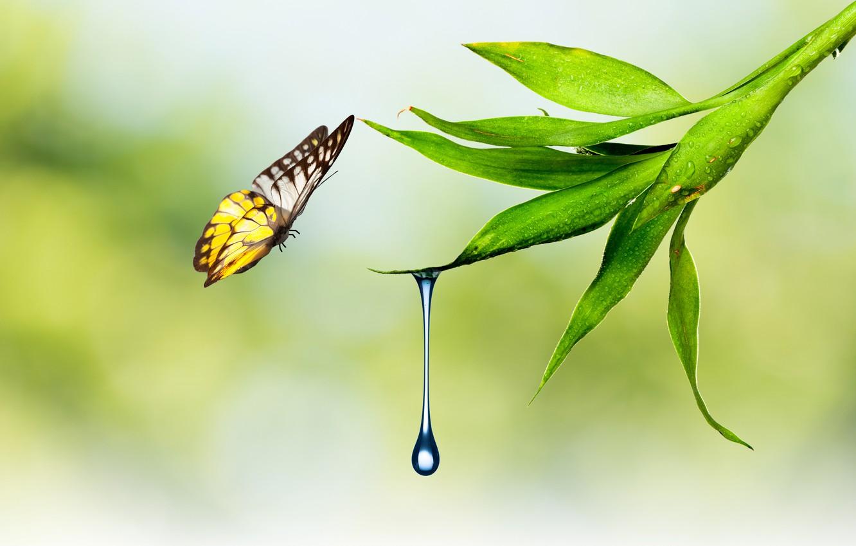Photo wallpaper water, nature, sheet, butterfly, plant, drop, moth