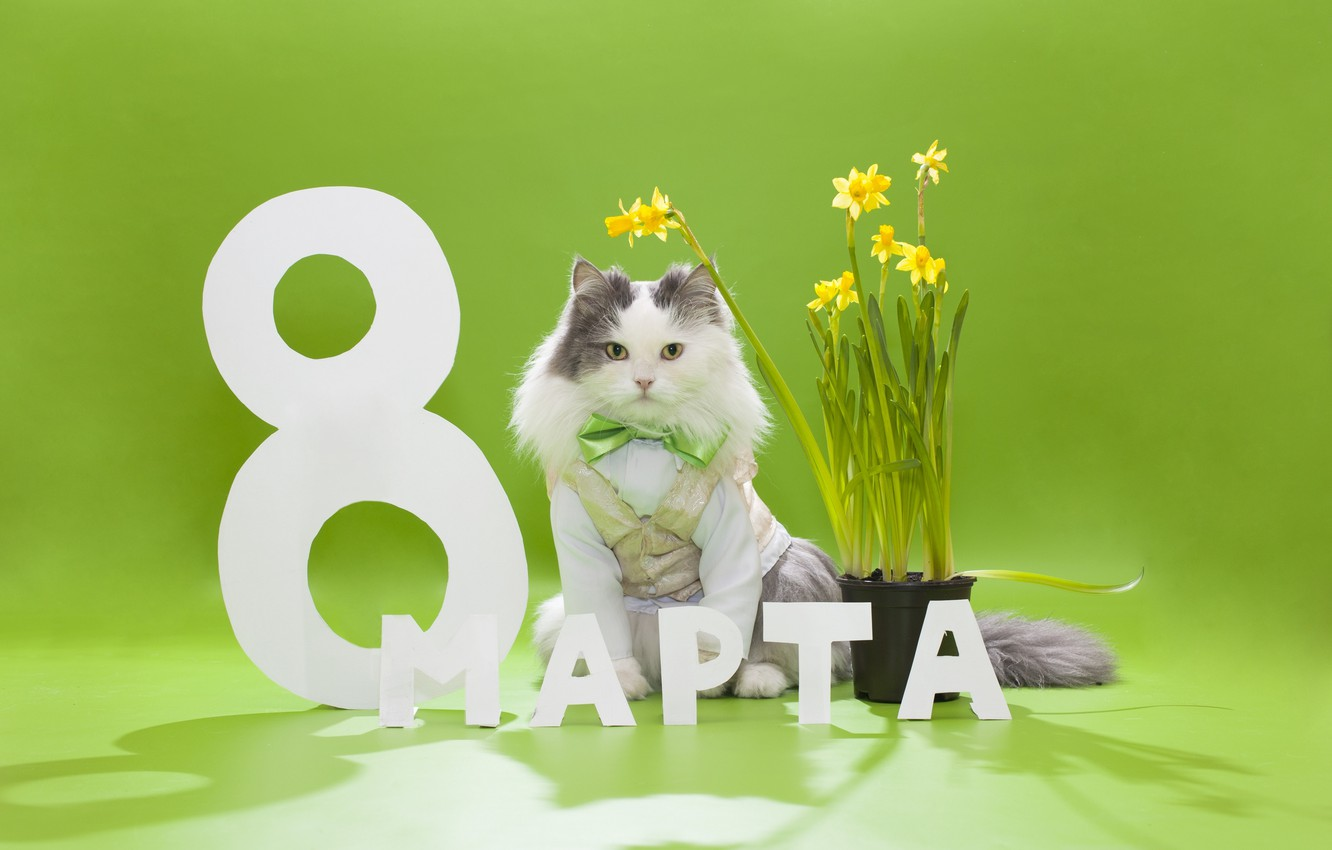 Photo wallpaper cat, flowers, butterfly, fluffy, daffodils, March 8, vest
