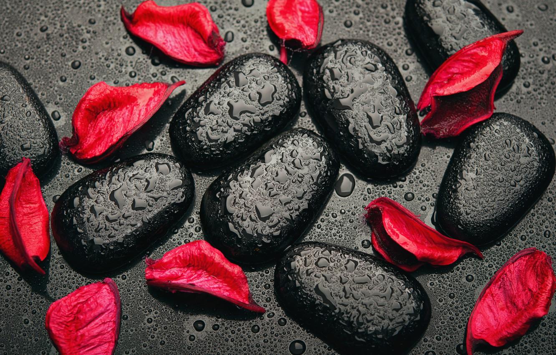 Photo wallpaper drops, stones, red, black, red, black, rose petals, stones, petals