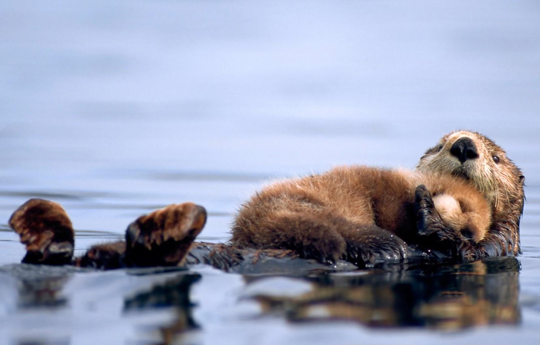 Photo wallpaper water, sleeping, cub, Kalan
