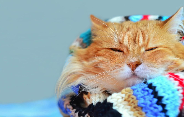 Photo wallpaper cat, mustache, look, bright, stay, blur, scarf, red, muzzle, cat, Tomcat, bokeh, foxy, wallpaper., warm, …