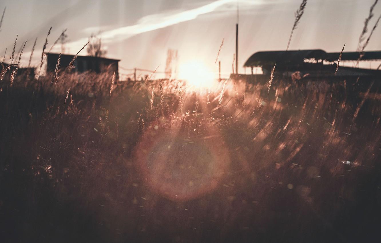 Photo wallpaper field, grass, the sun, light, sunset, orange, orange sun