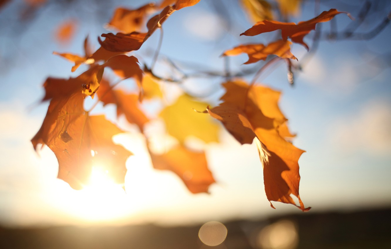 Photo wallpaper autumn, the sky, leaves, the sun, light, branches, glare, tree, the wind, maple