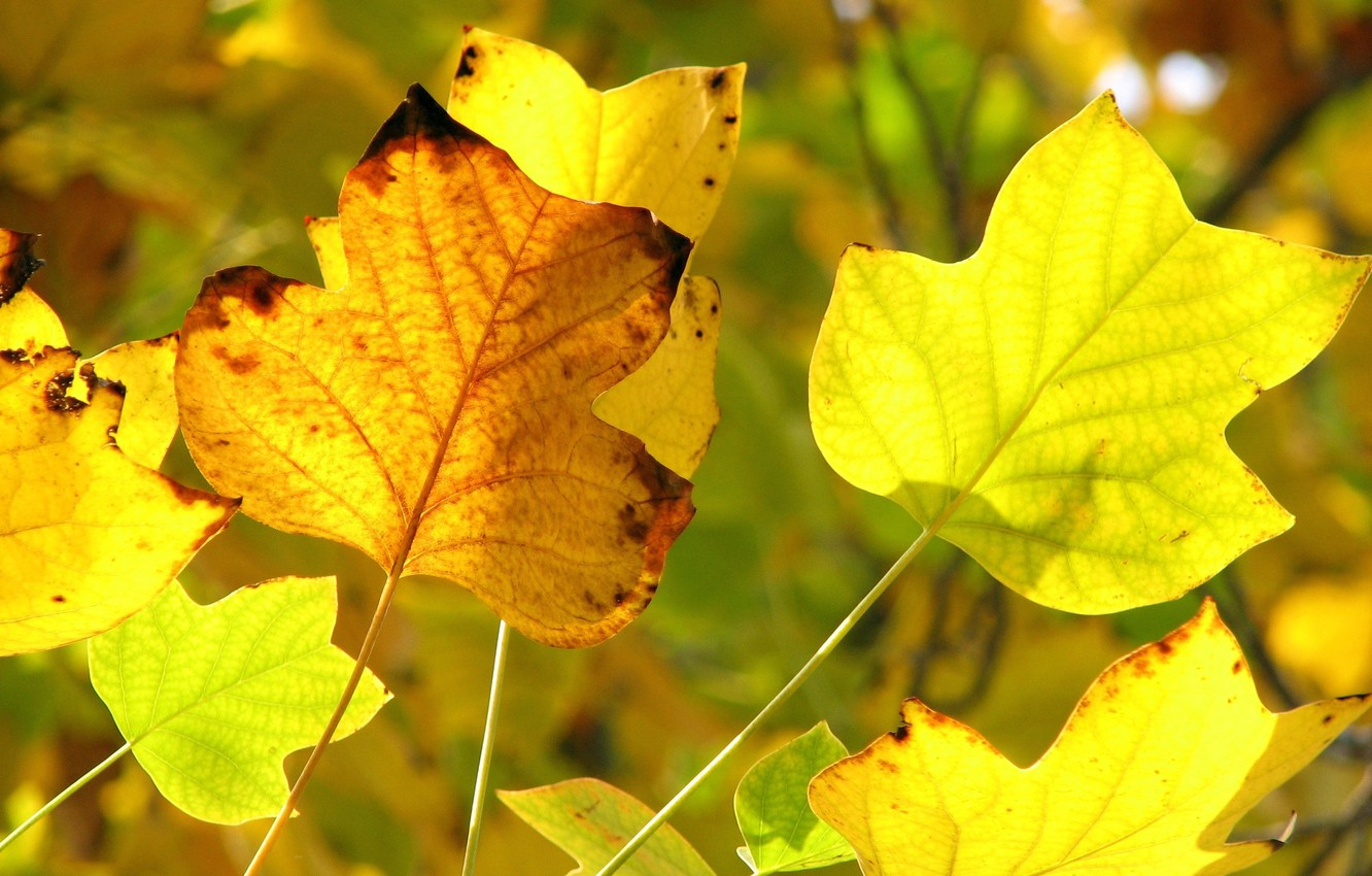 Photo wallpaper autumn, yellow, foreground, yellow leaves