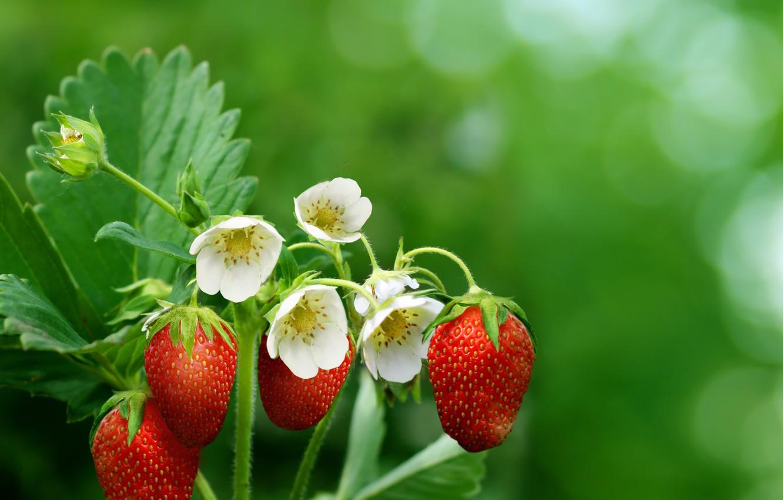Photo wallpaper leaves, flowers, berries, strawberry