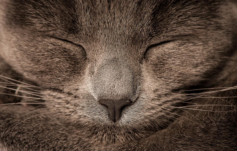Photo wallpaper cat, Koshak, sleeping, Tomcat