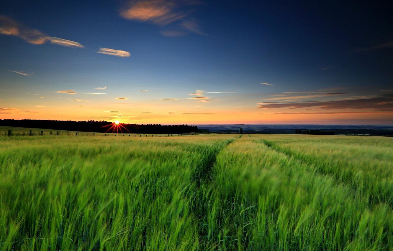 Photo wallpaper greens, field, the sky, grass, the sun, landscape, sunset, nature, background, widescreen, Wallpaper, the evening, …