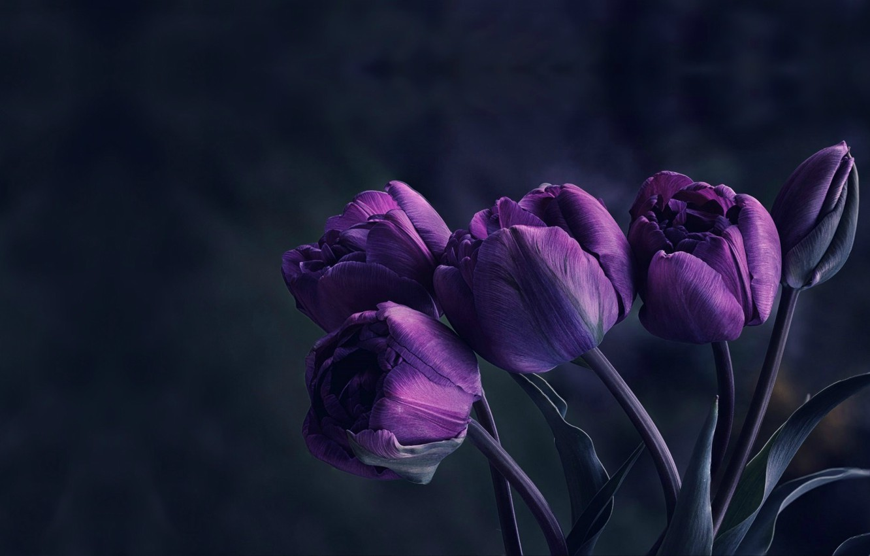 Photo wallpaper flowers, Tulip, bouquet