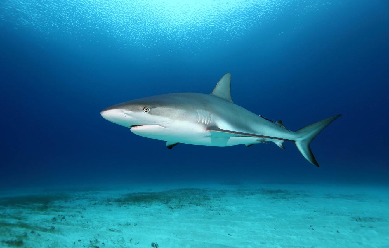 Photo wallpaper surface, shark, the bottom of the sea, sunlight