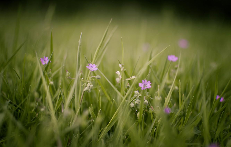 Photo wallpaper greens, summer, grass, macro, flowers, nature, photo, background, Wallpaper, glade, plants, flowering