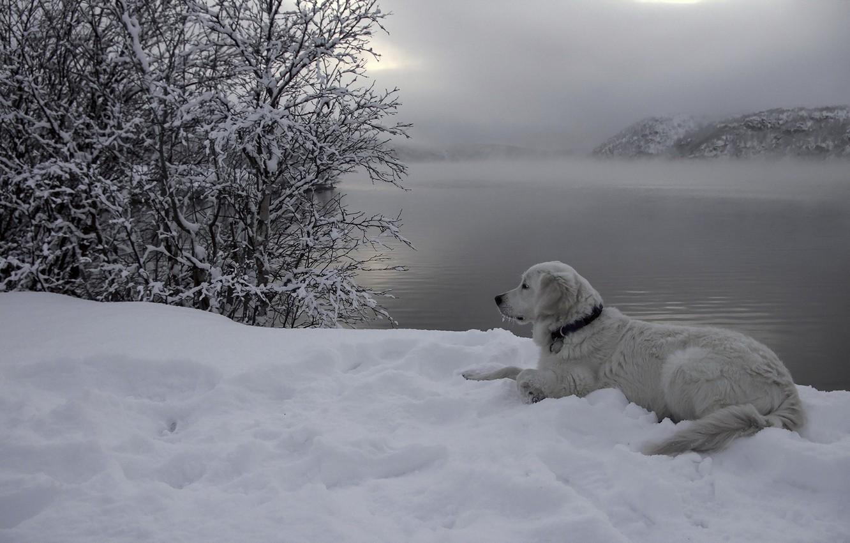 Photo wallpaper snow, river, each, dog