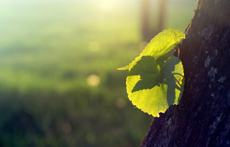 Photo wallpaper leaves, the sun, light, nature, tree, Rostock, bark, shoots