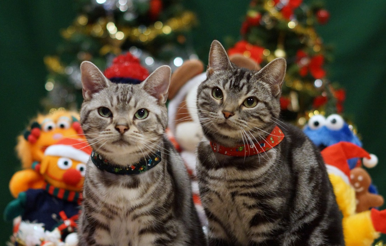 Photo wallpaper holiday, cats, Christmas, pair