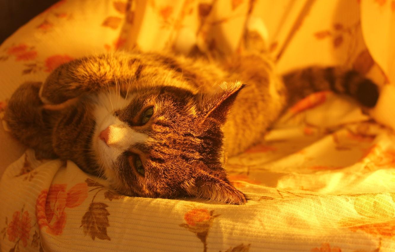 Photo wallpaper cat, cute, chair, resting