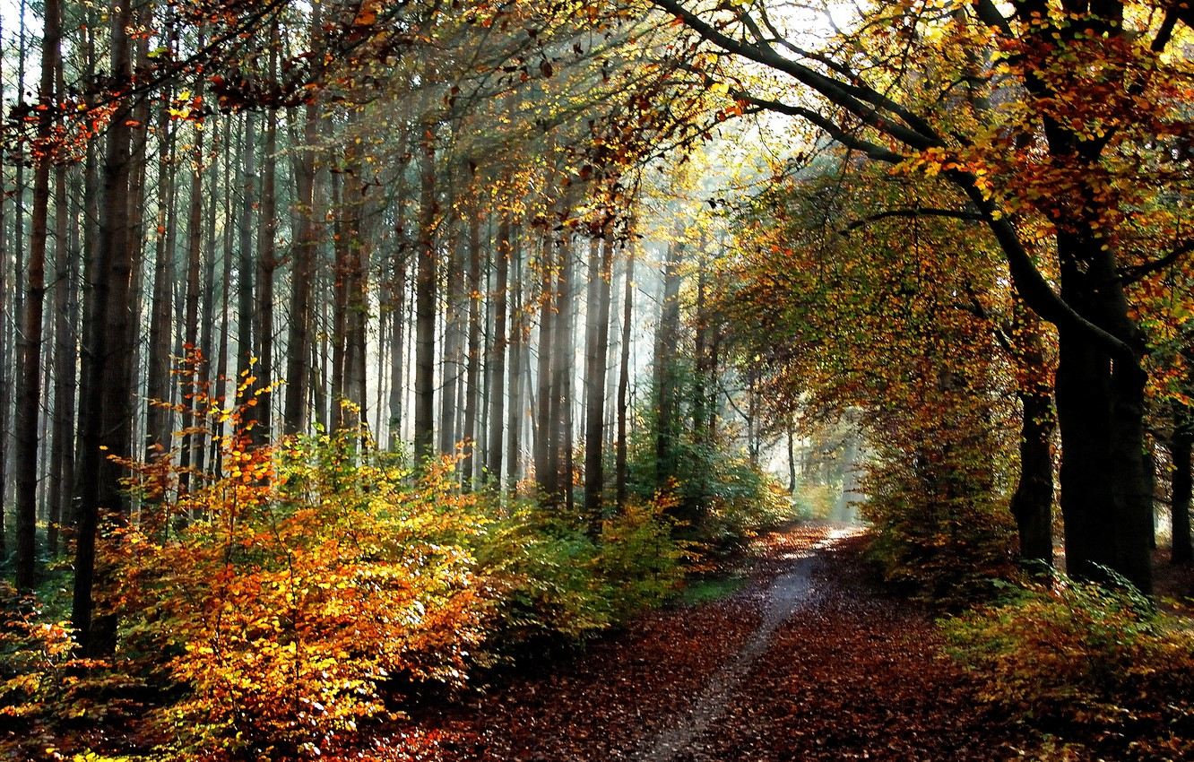 Photo wallpaper autumn, forest, leaves, trail, forest, grove, trees, Autumn, leaves