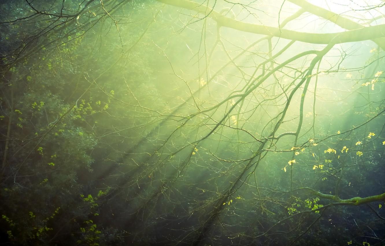 Photo wallpaper forest, the sun, rays, light, sunrise, morning