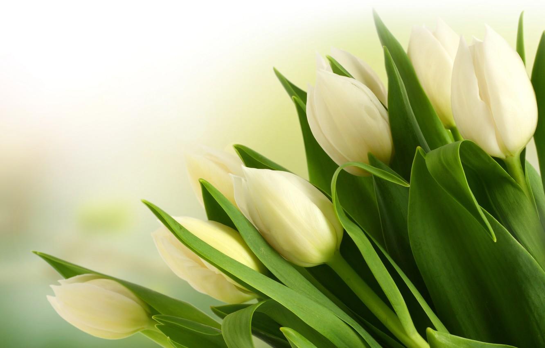 Photo wallpaper bouquet, tulips, white