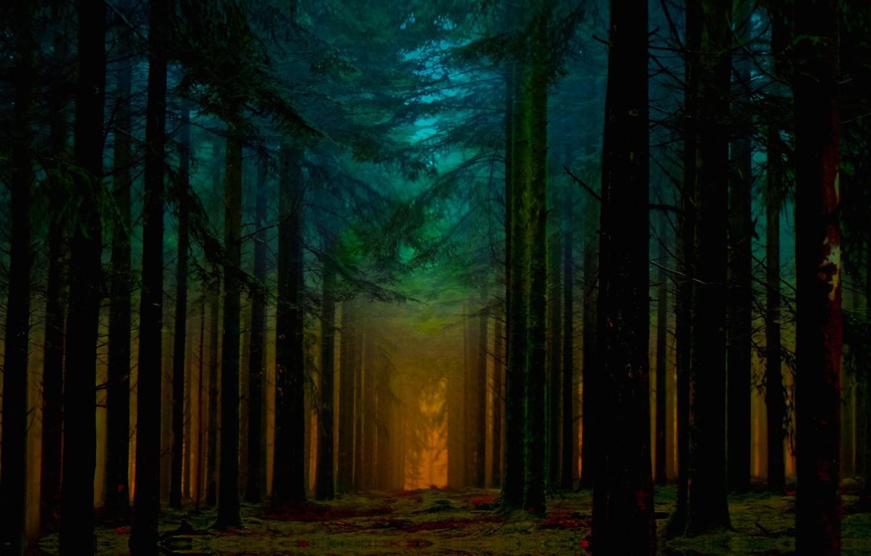 Photo wallpaper Orange, Beautiful, Blue, Fantastic, Sunrise, Forest, Ligth, Beam