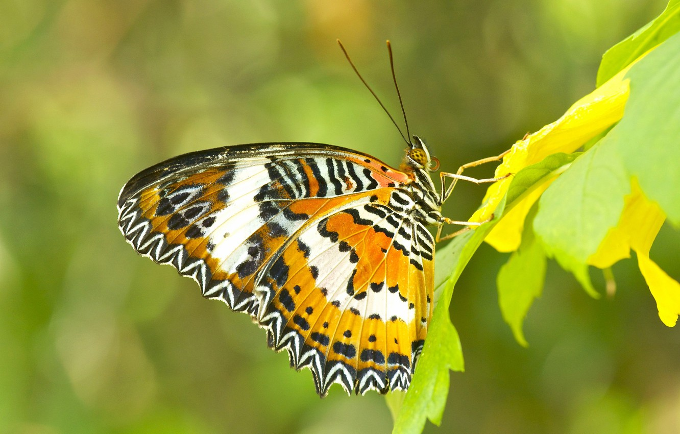 Photo wallpaper leaves, nature, butterfly, wings, insect
