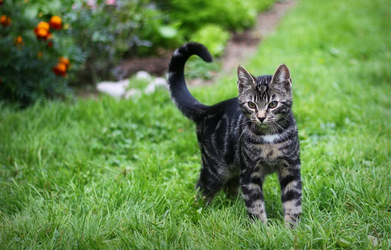 Photo wallpaper greens, grass, cat, striped, Kote