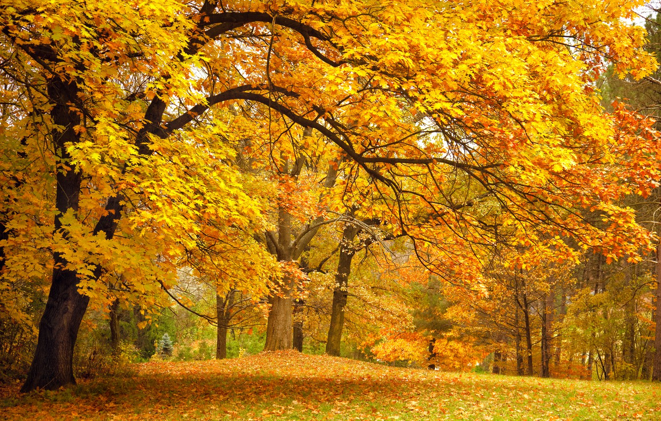 Photo wallpaper autumn, forest, leaves, trees, landscape, branches, nature, Park, glade, yellow
