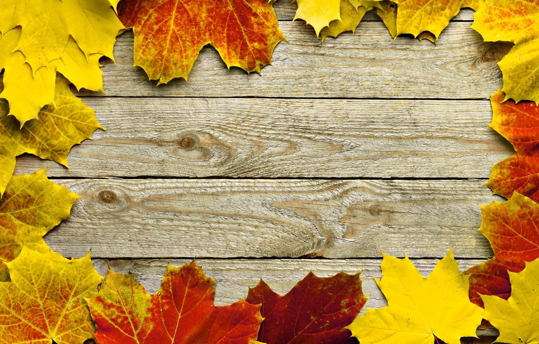 Photo wallpaper autumn, leaves, tree, frame, maple