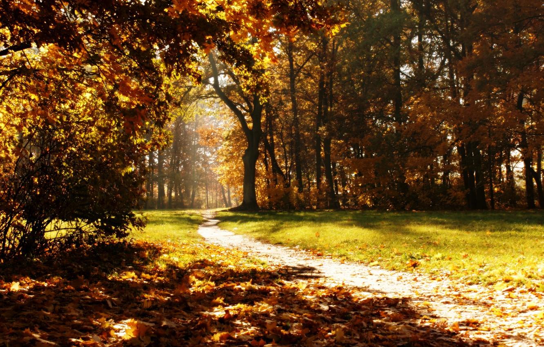 Photo wallpaper autumn, nature, Park, trail, autumn, path