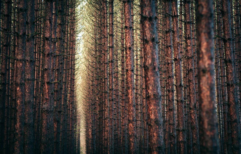 Photo wallpaper forest, trees, landscape, branches, nature, forest, trees, landscape, nature, 2560x1600, branches