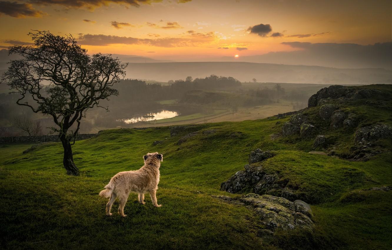 Photo wallpaper grass, sunset, dog, lake, tree, orange sky, contemplation
