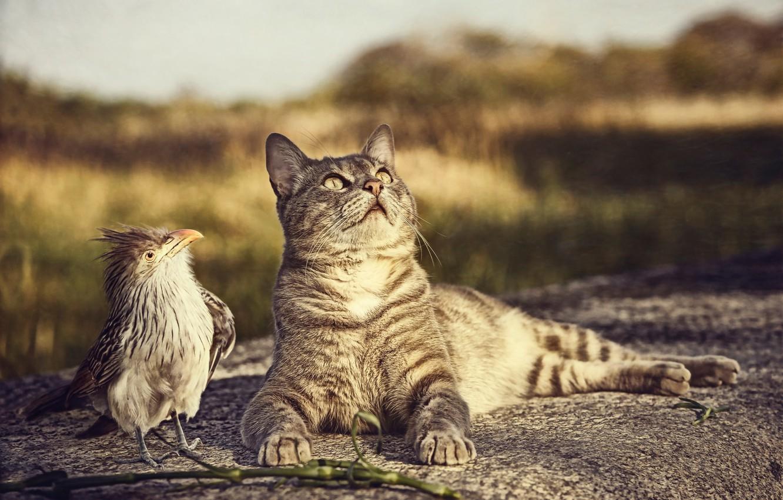 Photo wallpaper cat, bird, curiosity