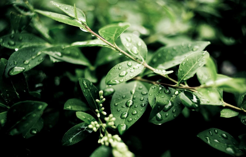 Photo wallpaper green, water, leaves, plant, moisture