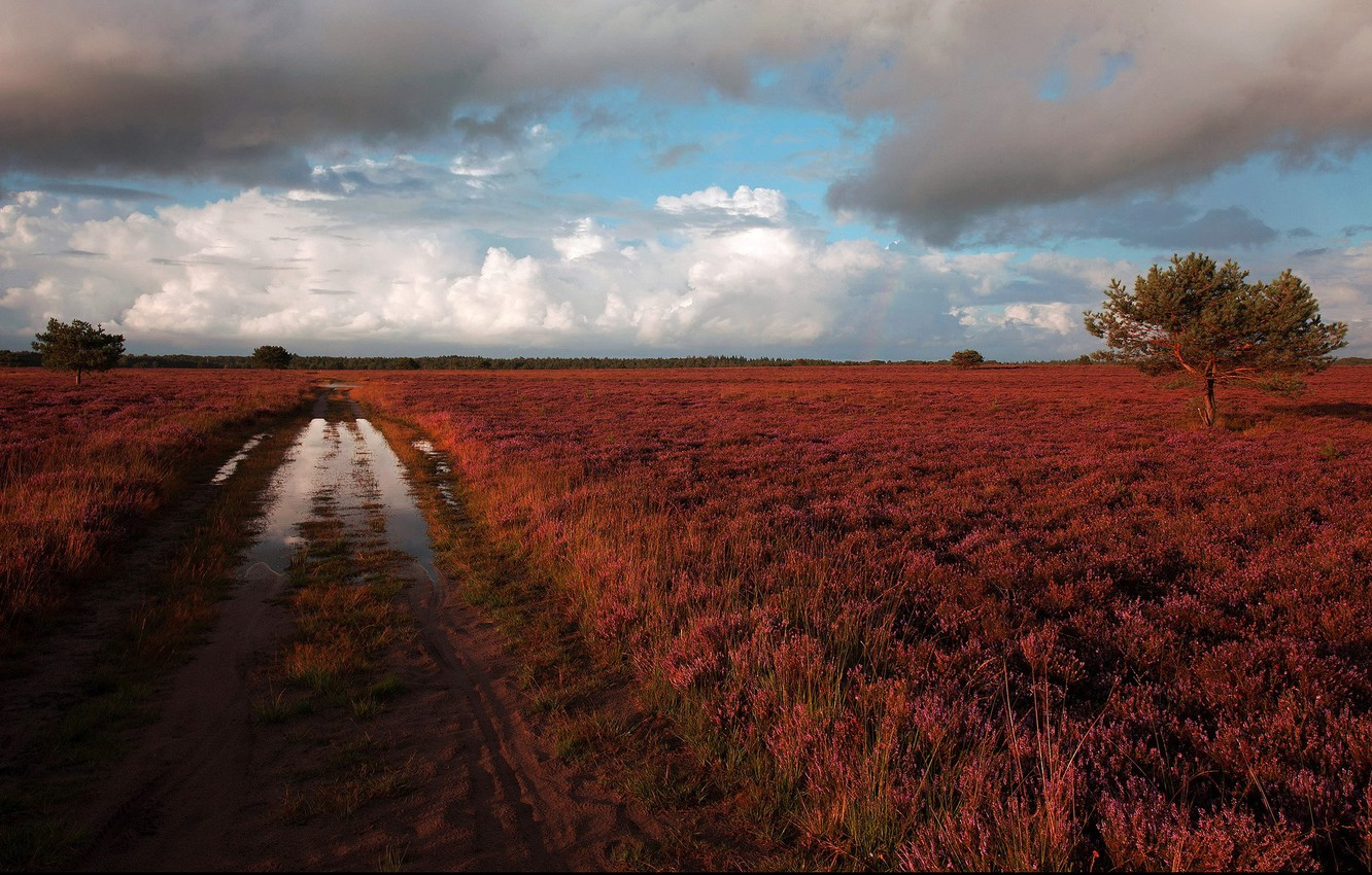 Photo wallpaper road, puddle, after the rain, Heath, Heather
