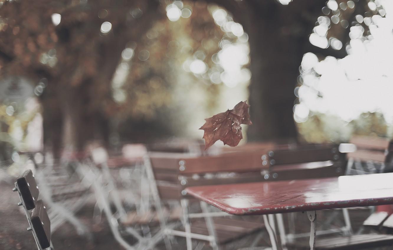 Photo wallpaper autumn, sheet, glare, Park, tree, cafe, tables