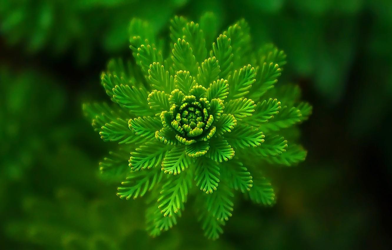 Photo wallpaper greens, grass, macro, plant, green, algae
