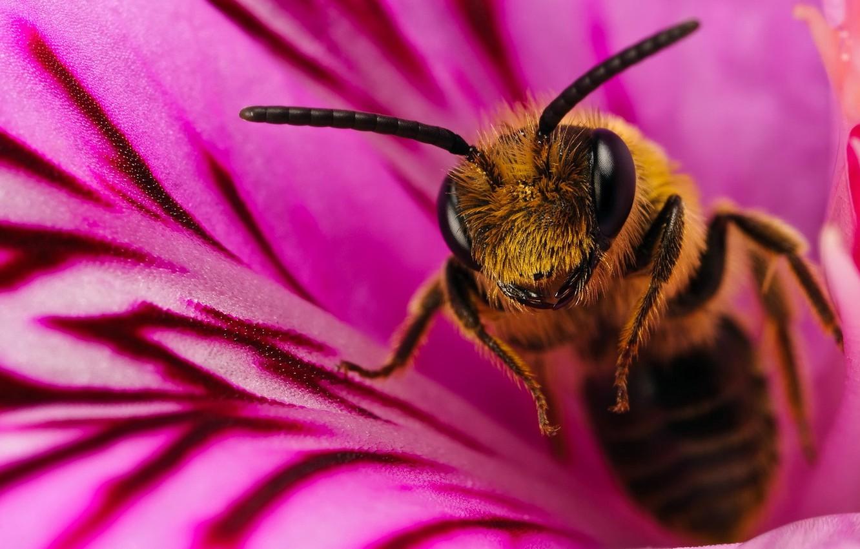 Photo wallpaper flower, macro, bee, 150