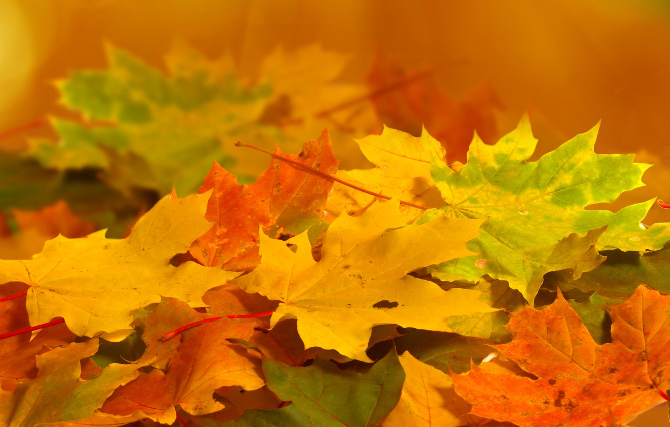 Photo wallpaper autumn, leaves, macro, nature, yellow, green, orange