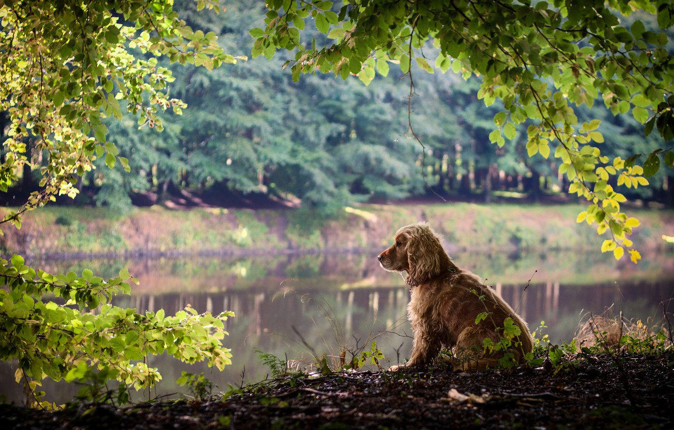 Photo wallpaper leaves, branches, nature, dog