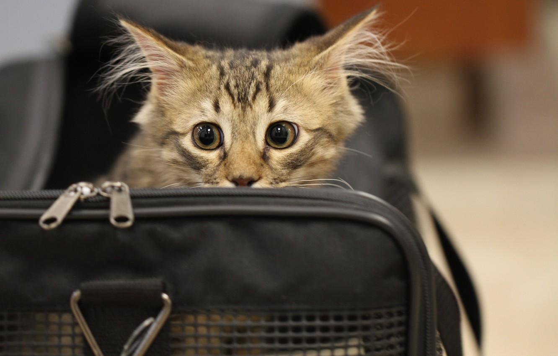 Photo wallpaper cat, eyes, cat, fright