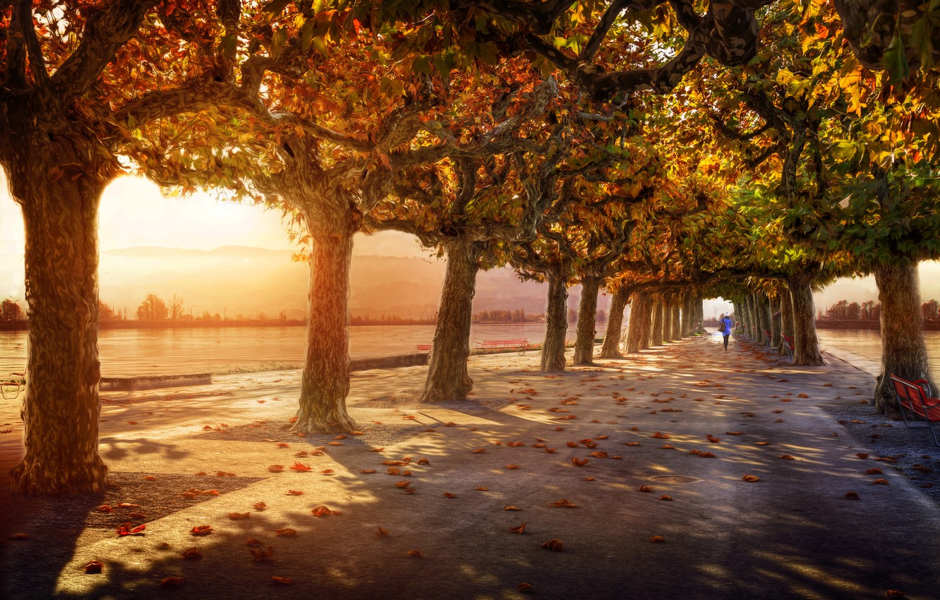 Photo wallpaper trees, treatment, alley, lady in blue