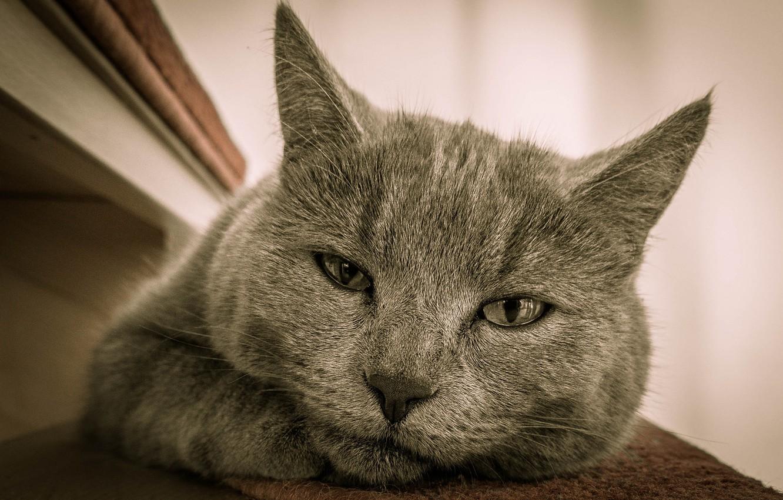 Photo wallpaper eyes, mustache, Koshak, Tomcat, pug