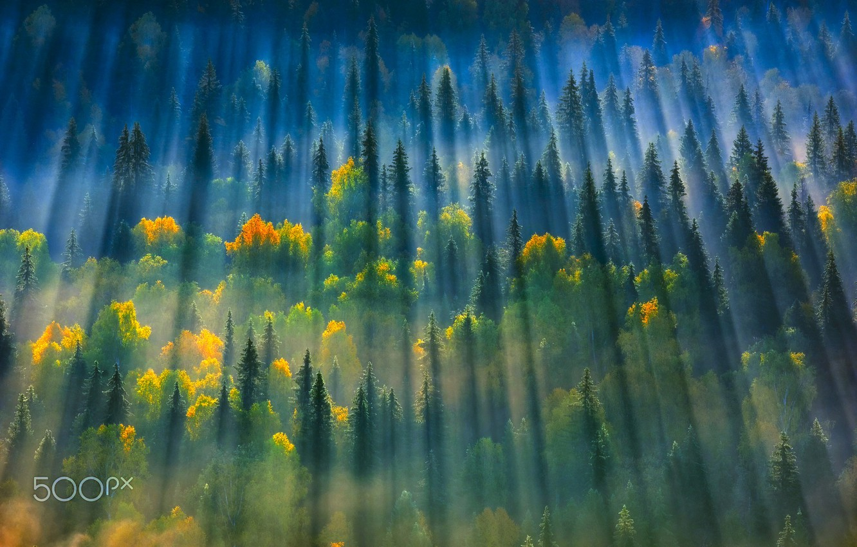 Photo wallpaper autumn, forest, light, trees, nature, haze