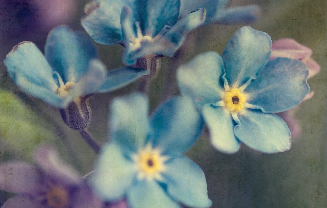 Photo wallpaper flowers, style, background