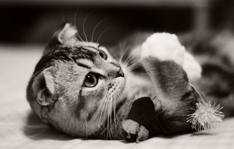 Photo wallpaper cat, kitty, animal, kitten, cat, animal