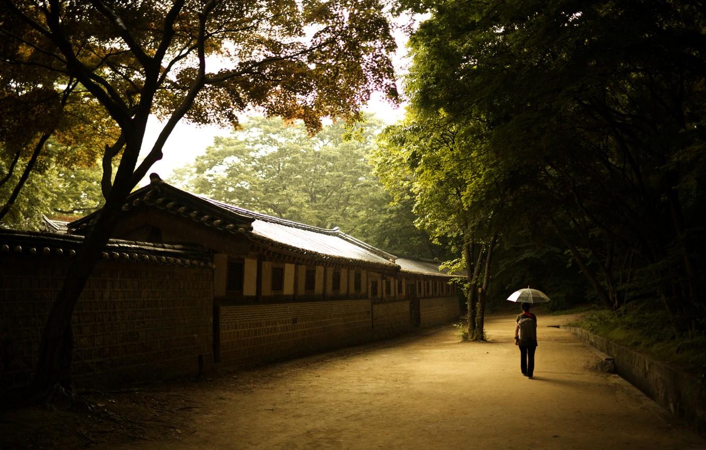 Photo wallpaper girl, wall, umbrella, solace, Seoul, the Palace of prospering virtue, changdeok Palace, changdeokgung, Korea