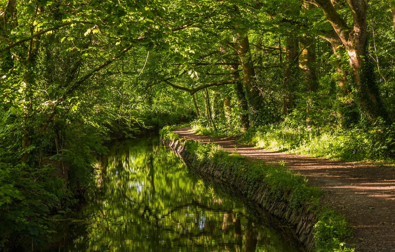 Photo wallpaper greens, forest, trees, river, England, river, path, England, West Devon, West Devon