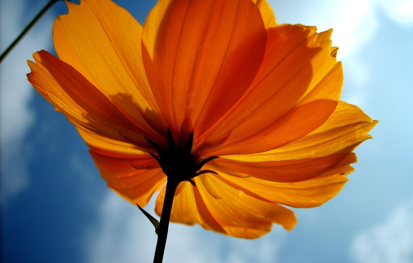 Photo wallpaper flower, sky, yellow, image